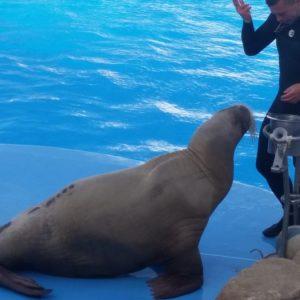 Delphinarium Ausflug Hurghada