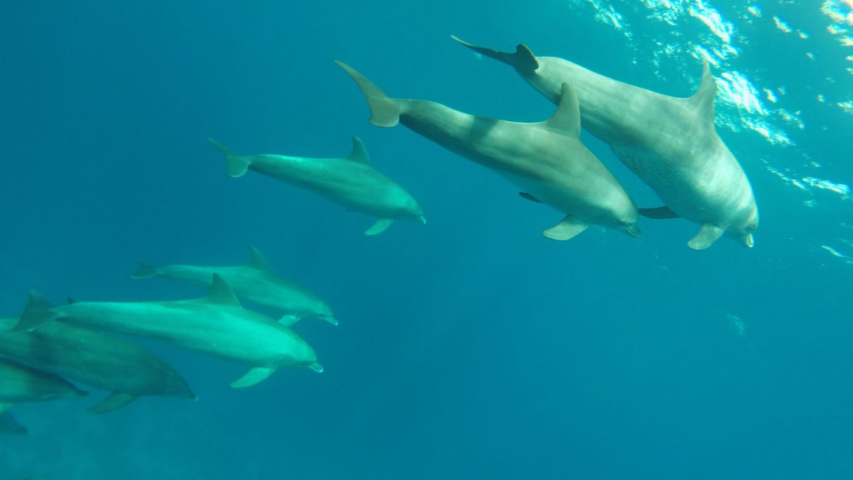 Delphinhaus Ausflug Hurghada