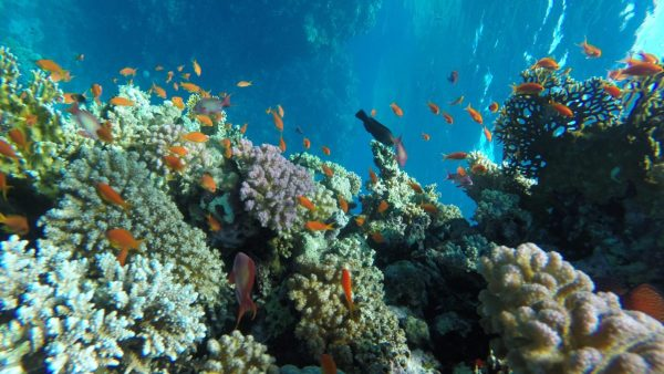 Diving Excursion Hurghada