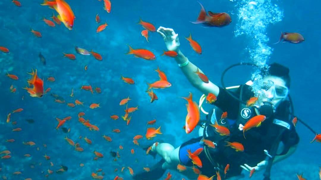 Ausflugstauchen in Hurghada