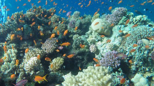 Ras Mohammed Tauchausflug Sharm El Sheikh