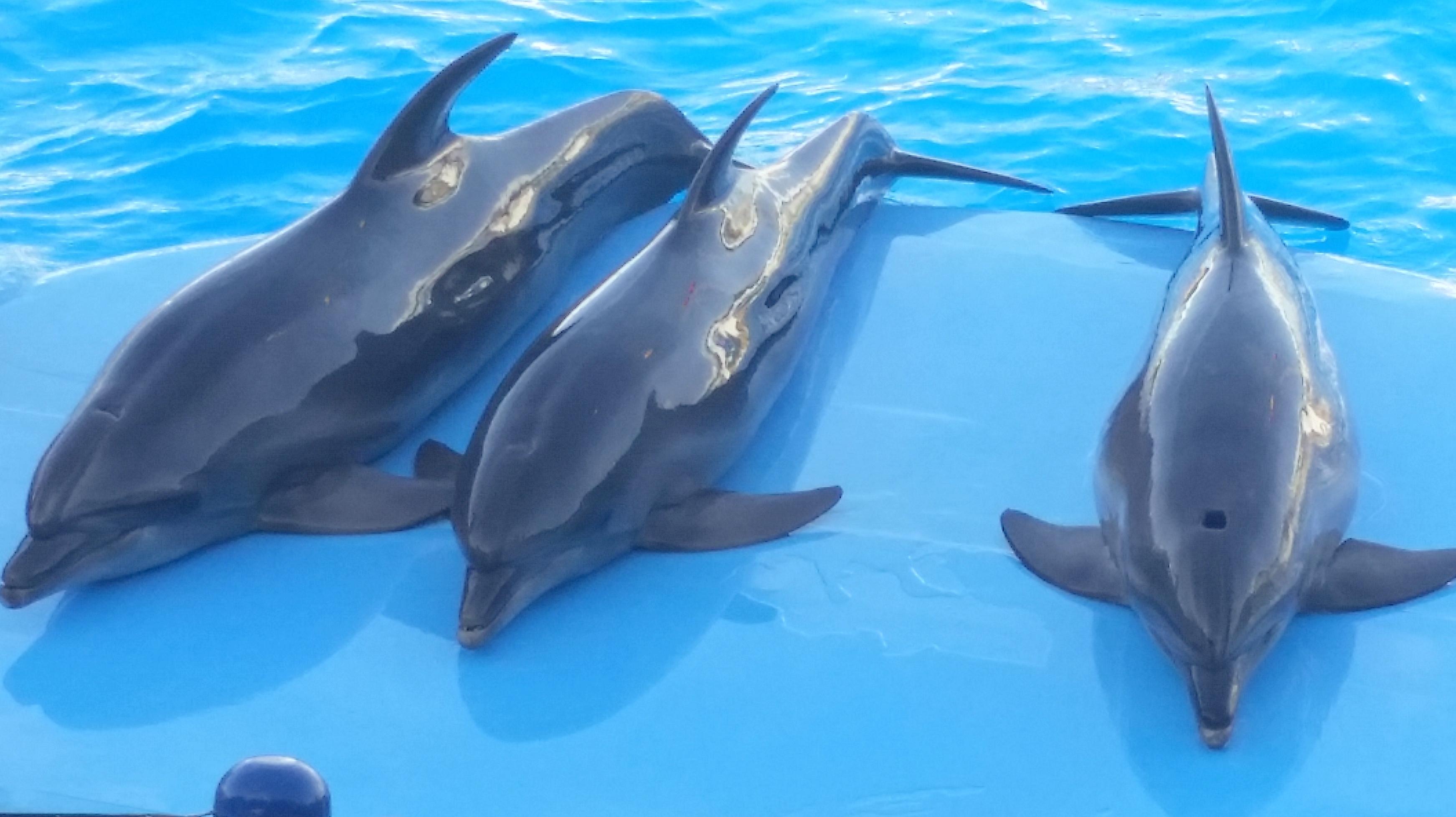 Dolphin Show Trip in Sharm El Sheikh