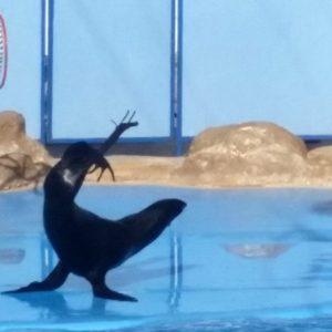 Excursion au delphinarium d'Hurghada