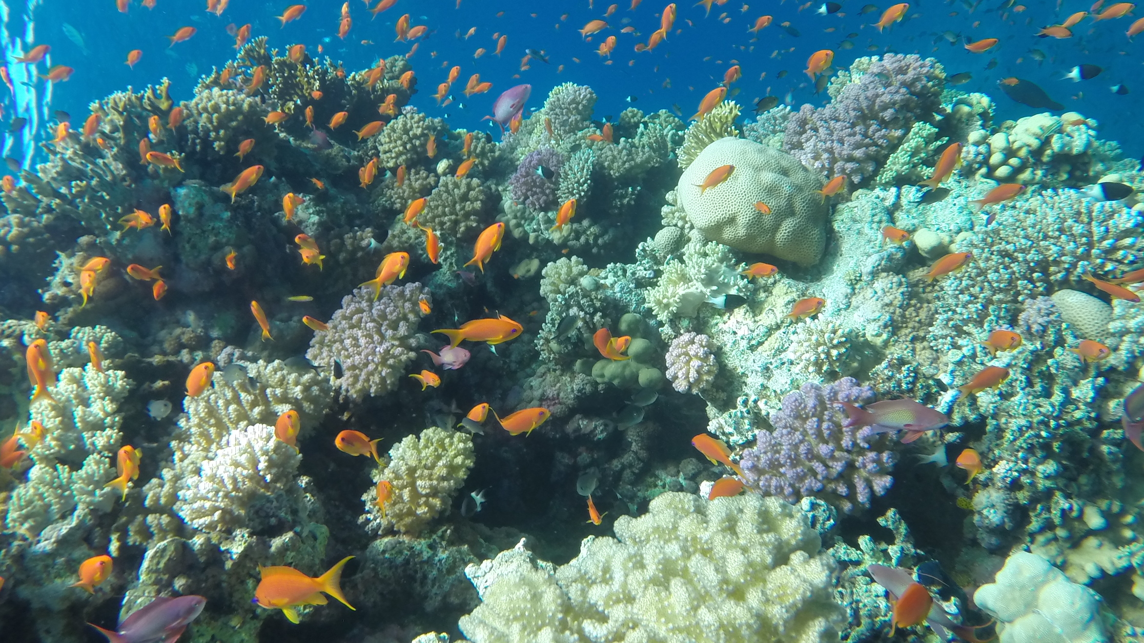 Excursion de plongée à Ras Mohammed de Charm el-Cheikh
