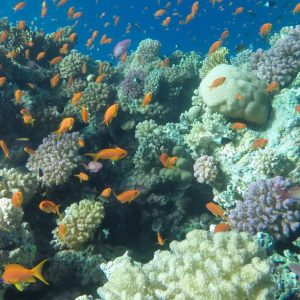 Ras Mohammed Diving Excursion Sharm