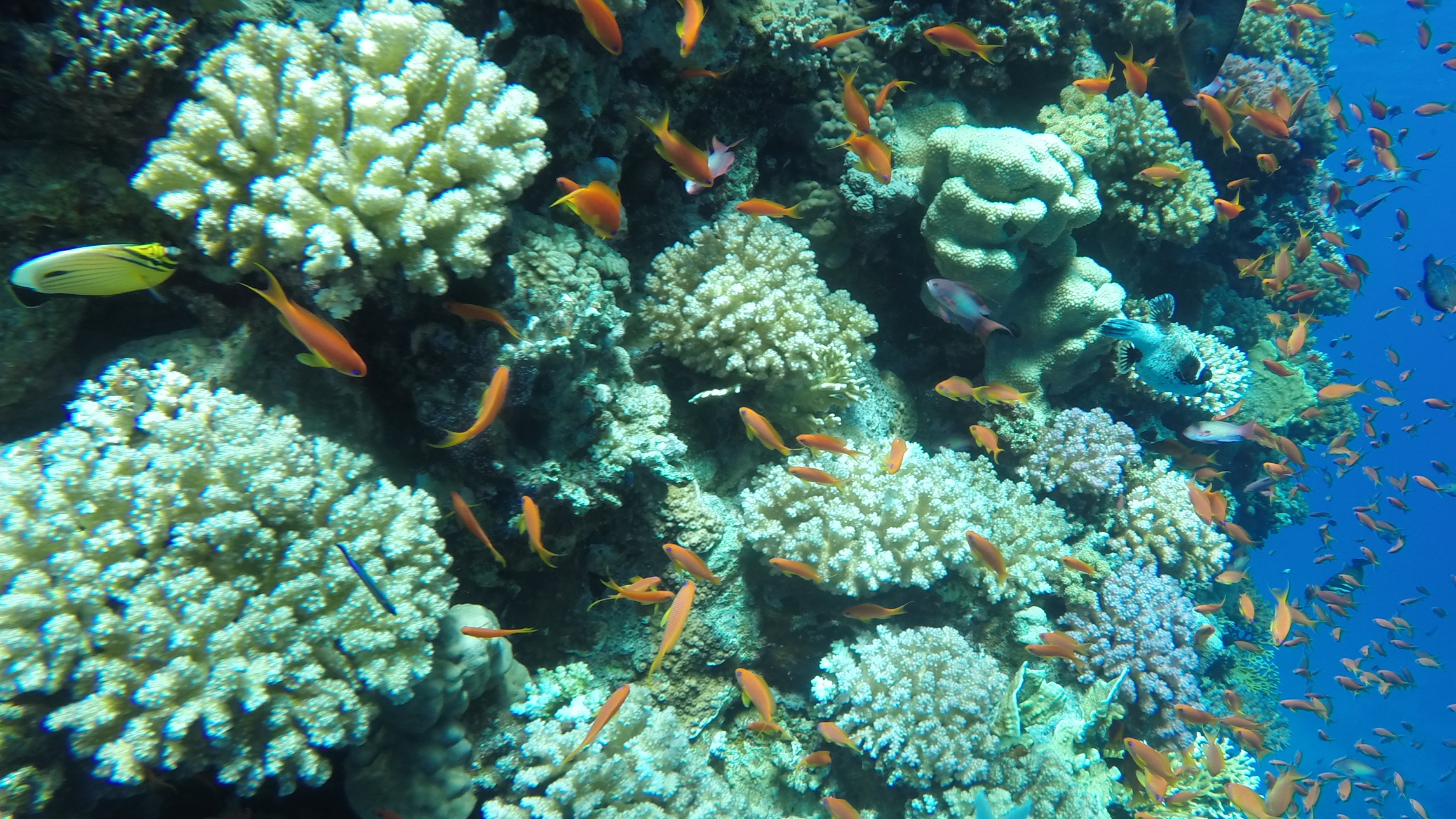 Excursion Diving Tiran from Sharm El Sheikh: photo of corals and fish near Tiran Island