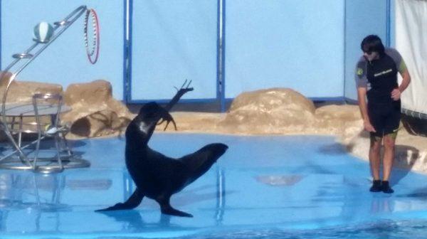 Εκδρομή στο δελφινάριο από τη Χουργκάντα