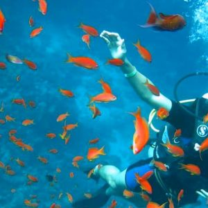 Excursión de buceo en Hurghada