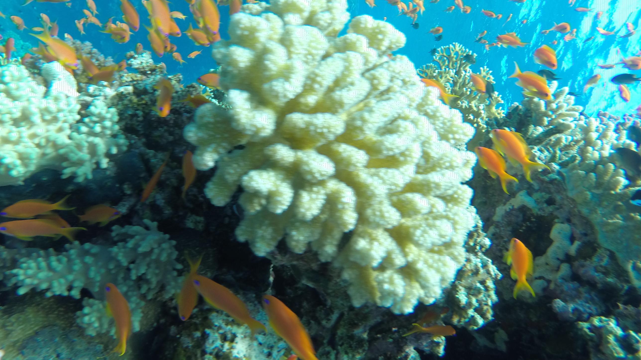 Viajes por mar en Sharm el-Sheikh