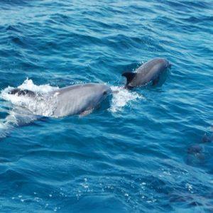 Частный катер в бухту Дельфинов из Хургады