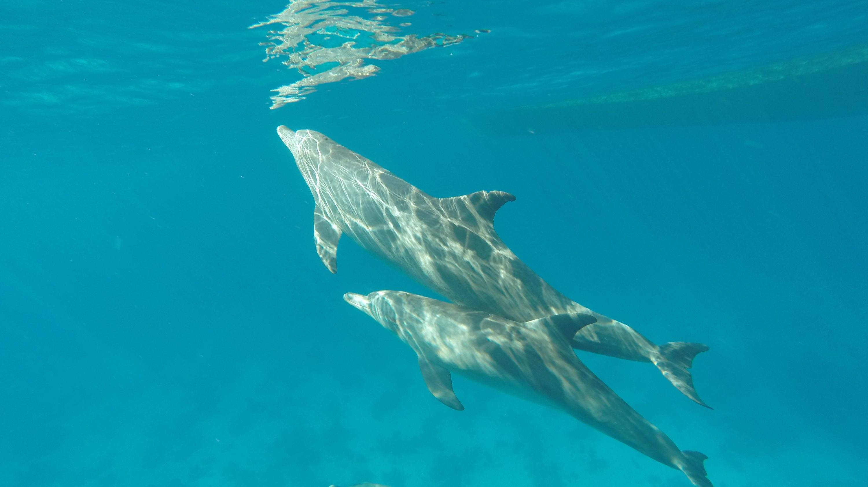 زورق سريع خليج الدلفين الغردقة