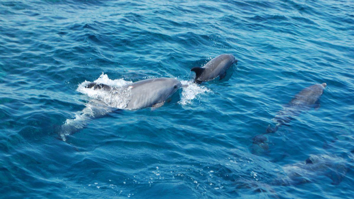 Dolphin Bay Speedboat Hurghada