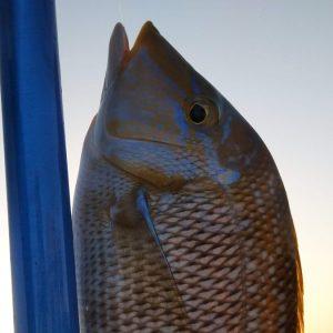 Екскурсія Риболовля з Шарм Ель Шейха