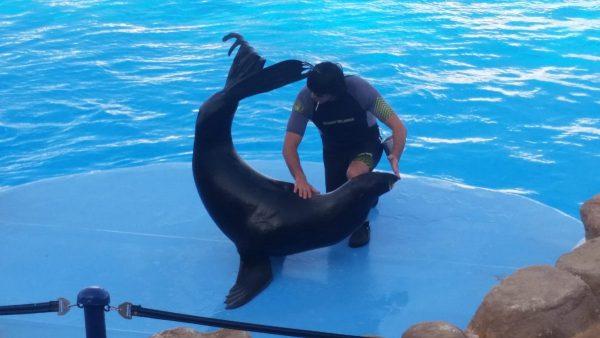 Поездка на шоу дельфинов в Шарм Эль Шейхе