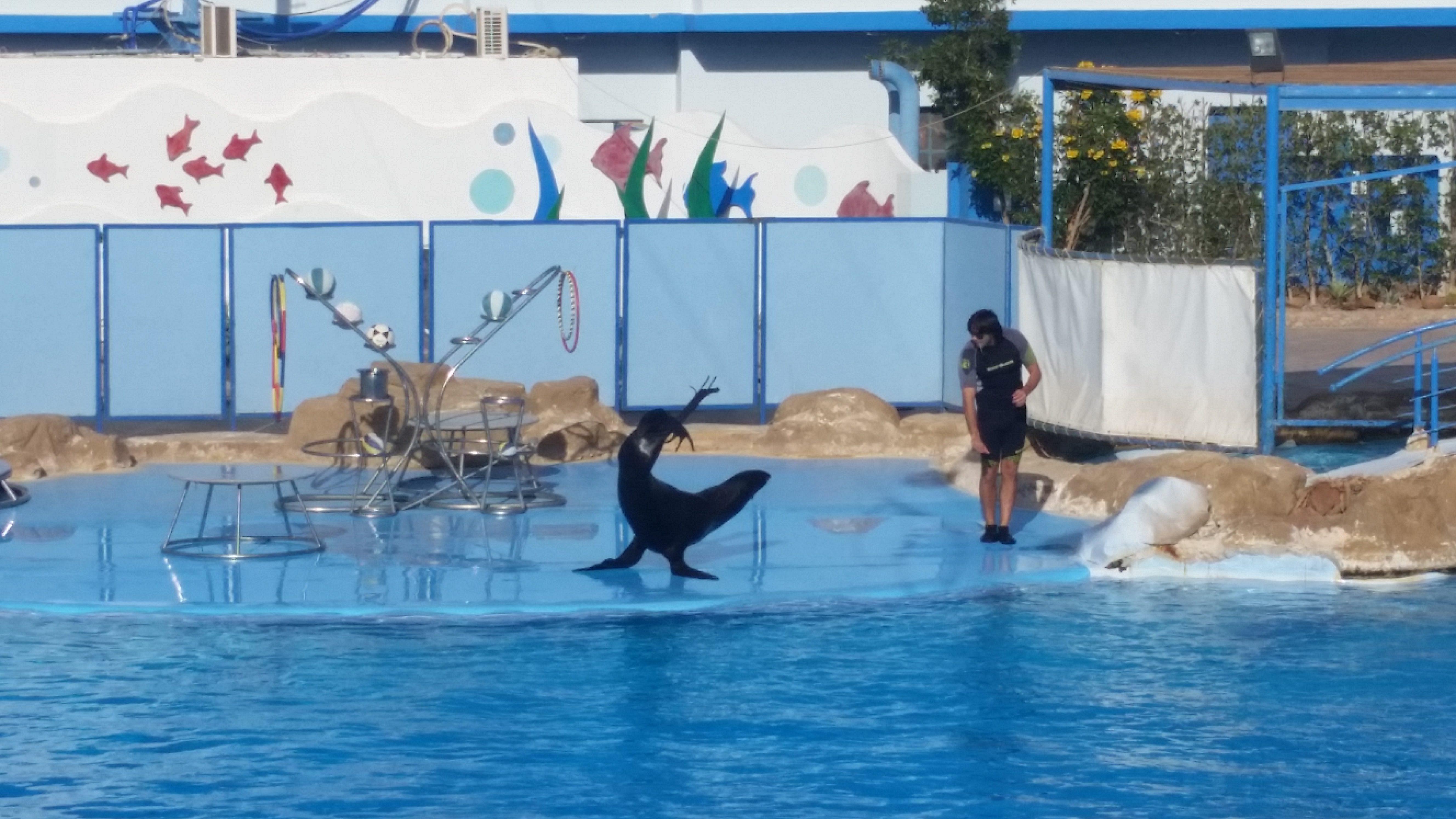 Поїздка на шоу дельфінів Шарм Ель Шейх