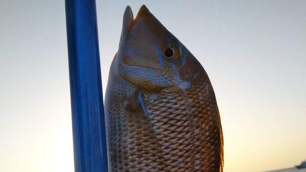 Рыбалка из Шарм эль Шейха