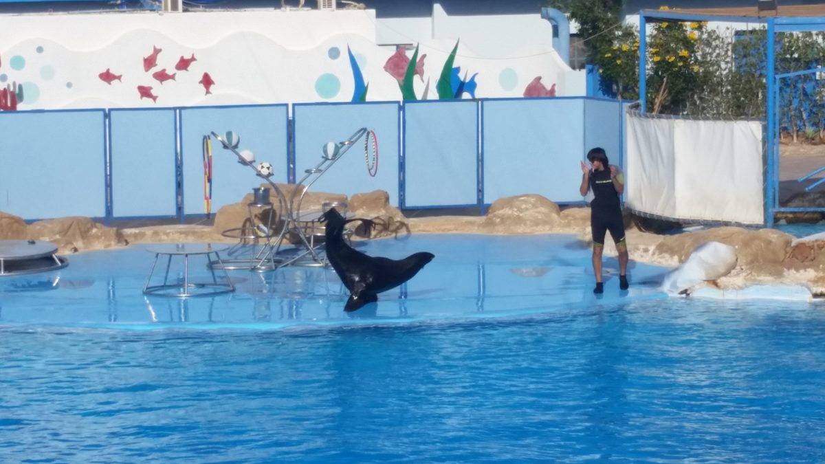 Delfinshow Reise Sharm El Sheikh
