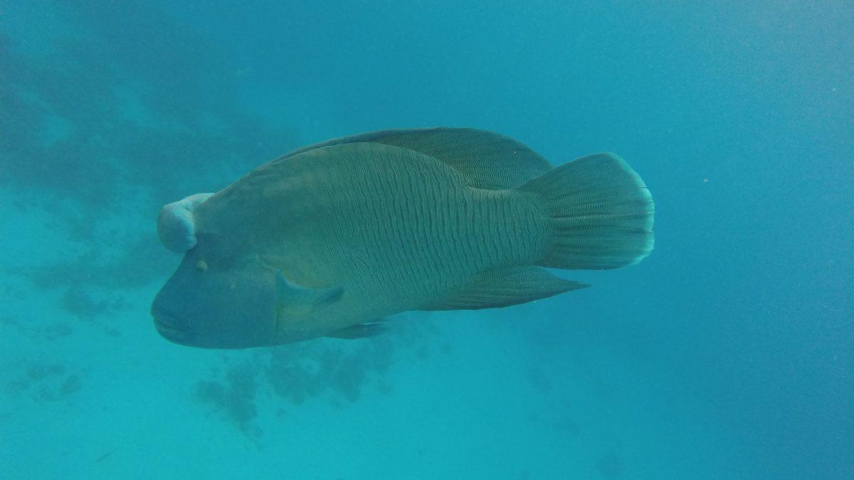 Dolphin Bay Trip Hurghada Price