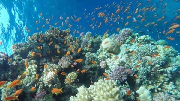 Utopia Island Safaga booking
