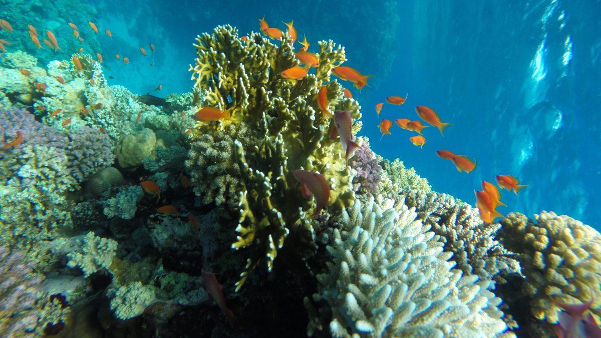 Sharm El Naga Hurghada booking