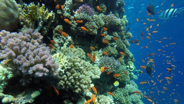 orange bay hurghada price