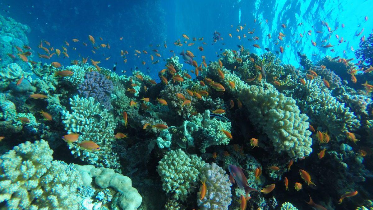 Mahmya Island Hurghada booking
