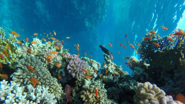 Super Gouna Hurghada Booking