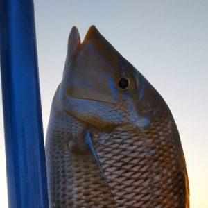 Fishing Trip Sharm El Sheikh