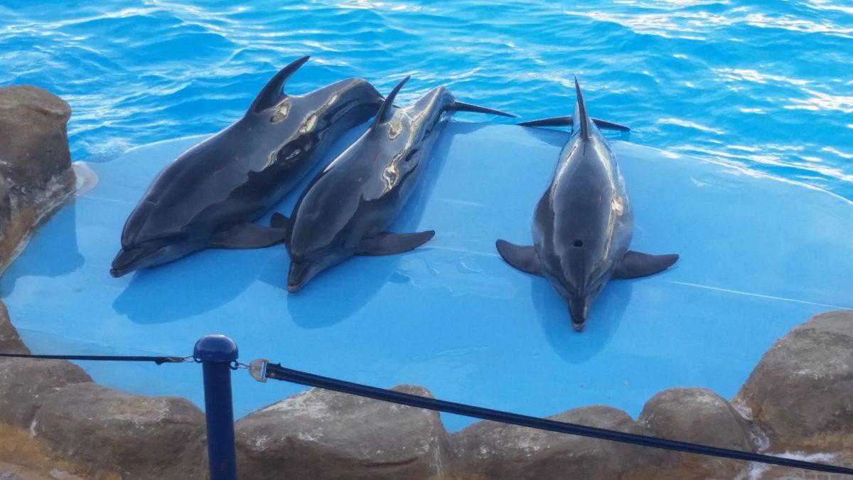 Hurghada Entertainment Excursions