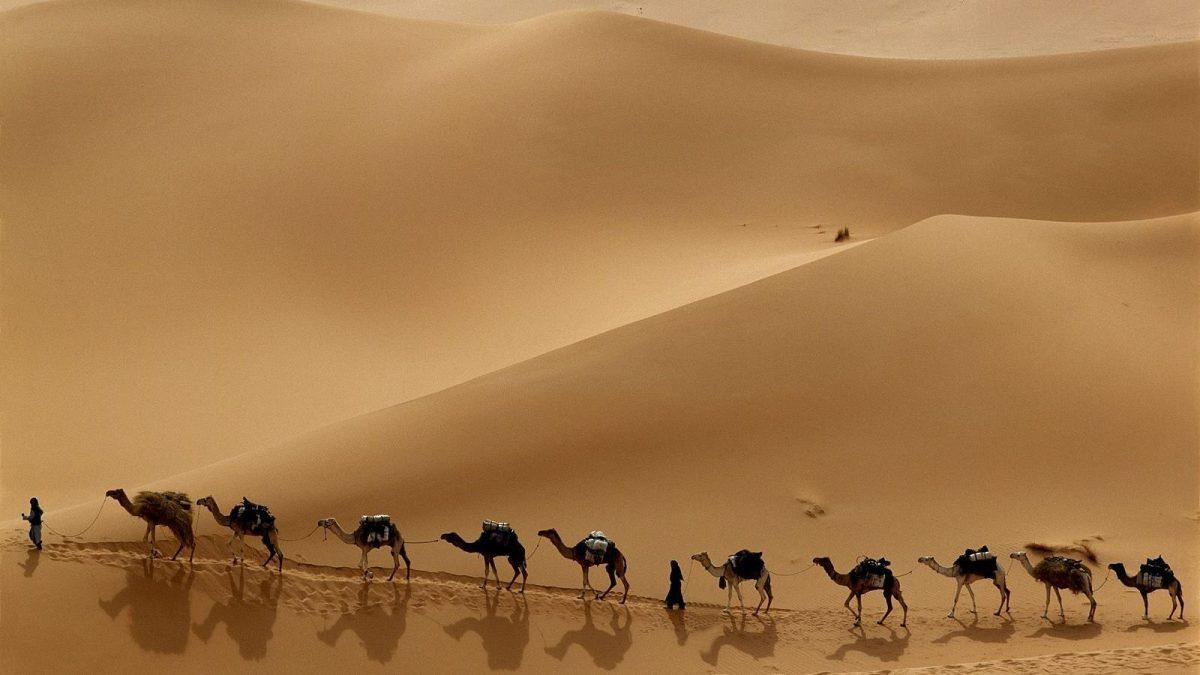 Safari Trips in Hurghada