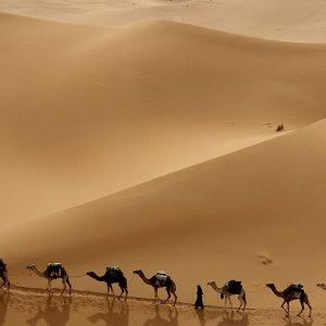 Safari aventures Marsa Alam